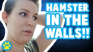 Rescuing My Hamster From Inside A Wall!!
