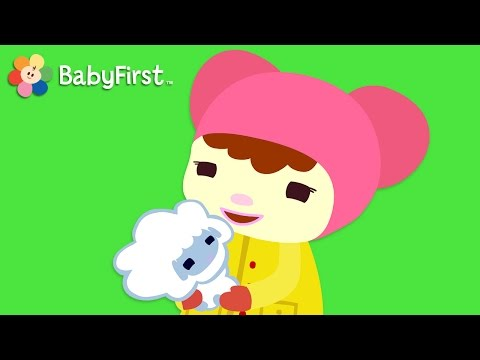 Mary Had a Little Lamb with Lyrics| Nursery Rhymes for kide  | BabyFirst TV