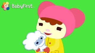 Mary Had a Little Lamb with Lyrics| Nursery Rhymes for kide  | BabyFirst TV