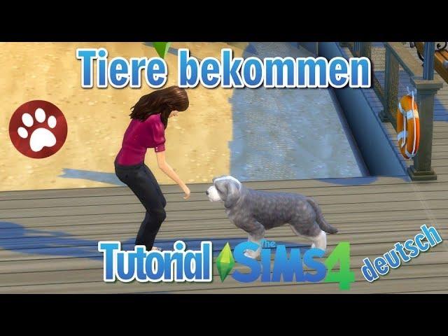Sims 4 Tutorial Hunde Katzen Erweiterungs Pack 1 So Bekommt Man Hunde Und Katzen Youtube