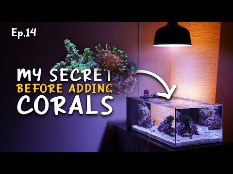 How I Prepare An Aquarium For Corals | Ep.14 Nano Reef Competition