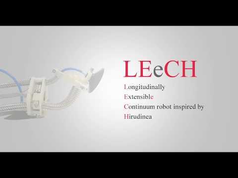Leech-based robot climbs vertical walls