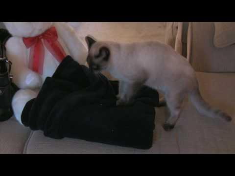 Mz.Kitty Katt from YouTube · Duration:  1 minutes 51 seconds