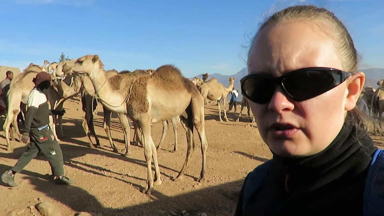 Эфиопия 2019: Рынок верблюдов возле Харара