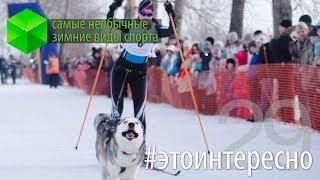 #этоинтересно   Выпуск 29: Зимние виды спорта