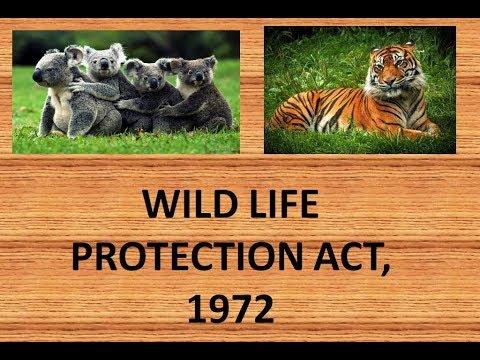Essay on conservation of wildlife