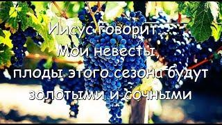 Иисус говорит... Мои невесты, плоды этого сезона будут золотыми и сочными