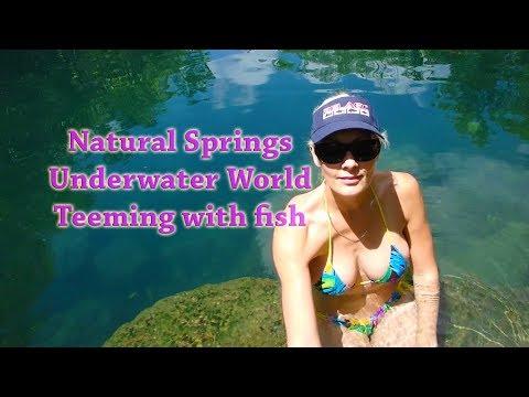 Berry Springs Darwin NT - Underwater Footage - Mangrove Jack