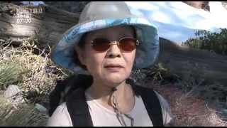 영상앨범 산   E156 그리움으로 오르는 산, LA 볼디산 090215 HDTV XviD Ental