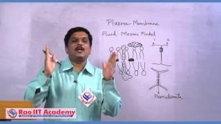 Plasma Membrane - NEET AIPMT AIIMS Botany Video Lecture [RAO IIT ACADEMY]