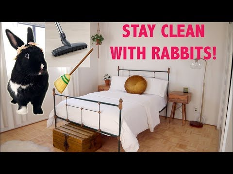 HOW TO KEEP YOUR HOME CLEAN & ORGANIZED WITH RABBITS