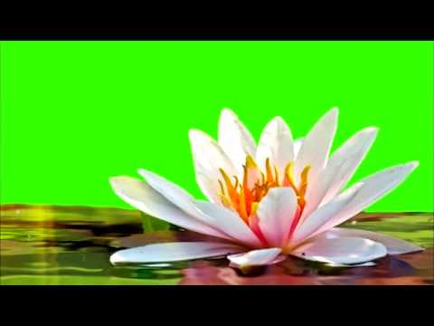 GREEN SCREEN FLOWERS,, GREETING CARD, SONY Vegas Pro, Adobe After Effects, VIDEO EDITING, thumbnail