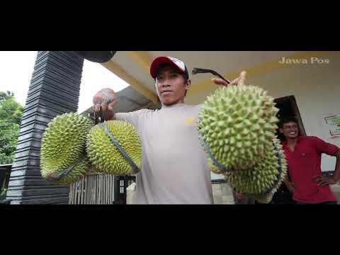 Jawa Pos Belah Durian Episode 47: Durian Klusu Nganjuk