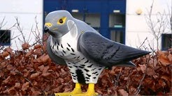 Robop - Effective Bird Control for Businesses with Bird Pest Problems