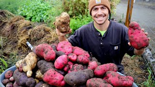 First Year Garden Potato Harvest | The BIGGEST Spuds We've Ever Seen!