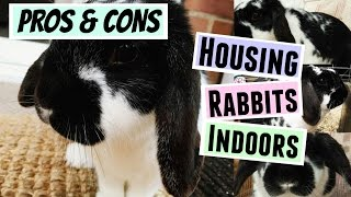PROS & CONS: Housing Your Rabbits Indoors | RosieBunneh