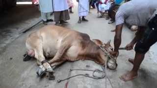 Red bull Qurbani Part-2 Dhaka, Bangladesh 2014