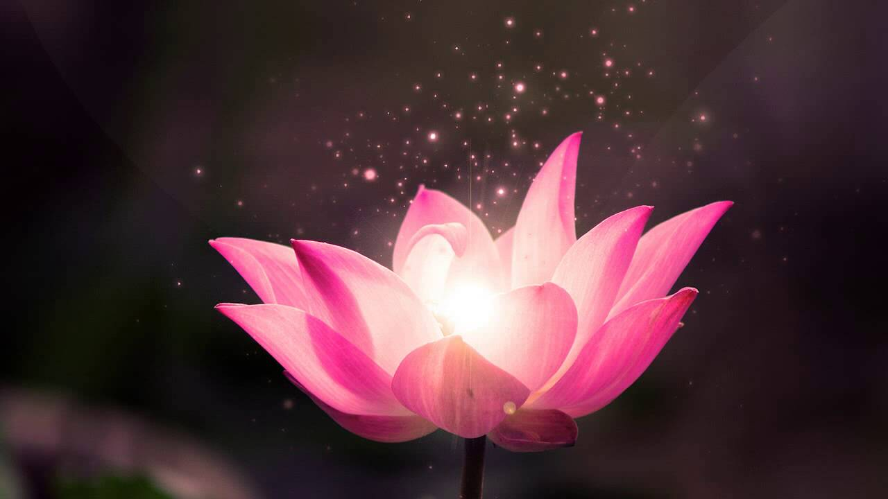 Secret Garden Lotus Rolf Lvland Youtube