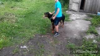 Собака Барри