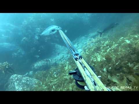 Spearfishing - Blue Moki - New Zealand