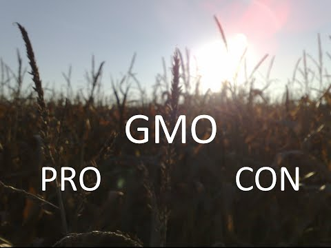 pros cons of gmos There are concerns from some experts about horizontal gene transfer as it pertains to gmos, specifically if the modified products can carry antibiotic resistance from this natural (but rare) transfer process the economist explained in a 2015 article that a major concern of gmos is that moving.