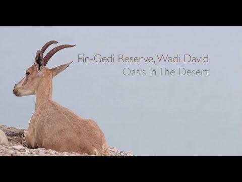 Ein Gedi Reserve - An Oasis In The Desert