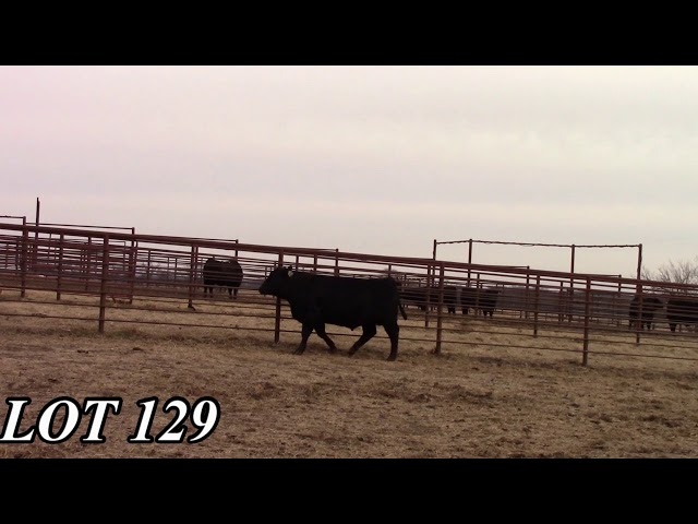 Mead Angus Farms Lot 129