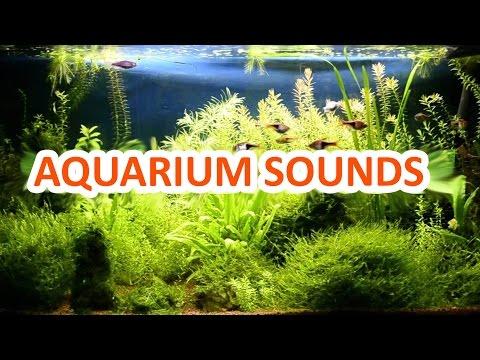 10 Hours Relaxing Aquarium Sounds Study Sleep Meditation Water Sounds Nature