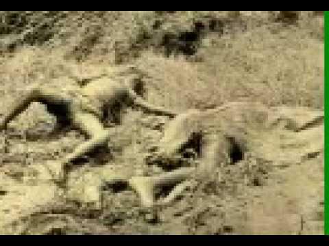 Morbi Honarat  Machhu Dam Disaster-1979 મોરબી મચ્છુ ડેમ જળ હોનારત