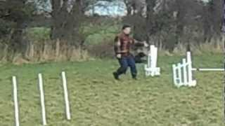 Dog Agility In Ireland