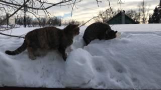 Котята сильно подросли.