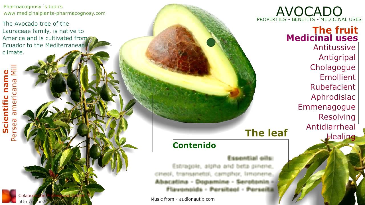 avocado benefits avocado tree fruit seed leaves and health youtube. Black Bedroom Furniture Sets. Home Design Ideas