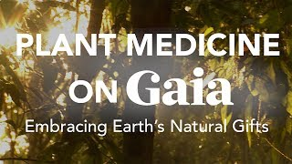 Plant Medicine Highlights on Gaia | Embracing Earth's Natural Gifts