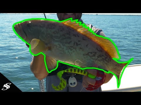 Learn How To Catch Tasty Saltwater Grouper Trolling!