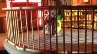 高知県にある闘犬場で土佐犬が出演.