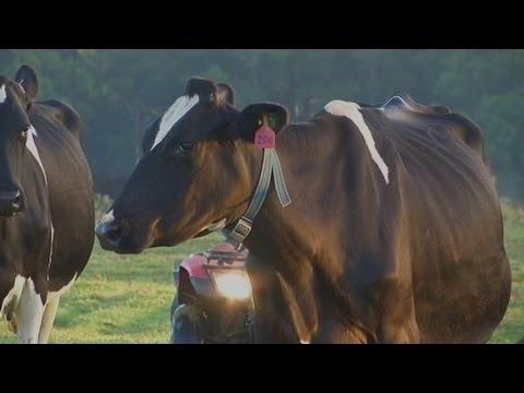 Australia Wide: Inside this dairy, a high-tech revolution is underway