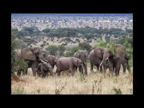 Tanzania  Top 10 Tourist Attractions   Video Travel Guide