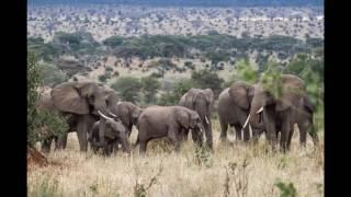 tanzania-top-10-tourist-attractions-video-travel-guide