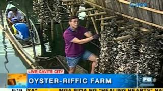 What is the process of oyster farming in Cavite City? | Unang Hirit