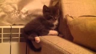 Котенок засыпает или Света на работе