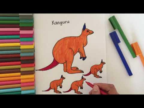 Kanguru Ve Koala Boyama Okul Oncesi Egitim Cocuklar Icin