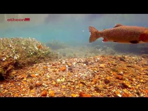 Fliegenfischen  - Nymphenfischen im Frühjahr