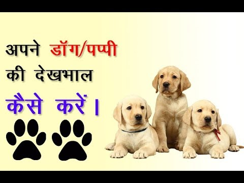 How To Take Care of new Puppy Dog in Hindi | How to purchase new dog for home