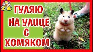 МОЖНО ГУЛЯТЬ С ХОМЯКОМ НА УЛИЦЕ? / ПРОГУЛКА ХОМКИ / Alisa Easy Pets