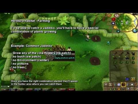 Ultimate Herblore Habitat Guide | Fastest Hunter XP In Game! | JuJu Farming Potions - Bonbloc