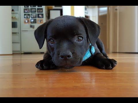 Pet Registration is due by 10 April