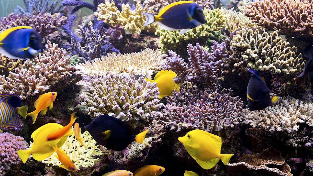 How to Pick Corals for a Fish Tank