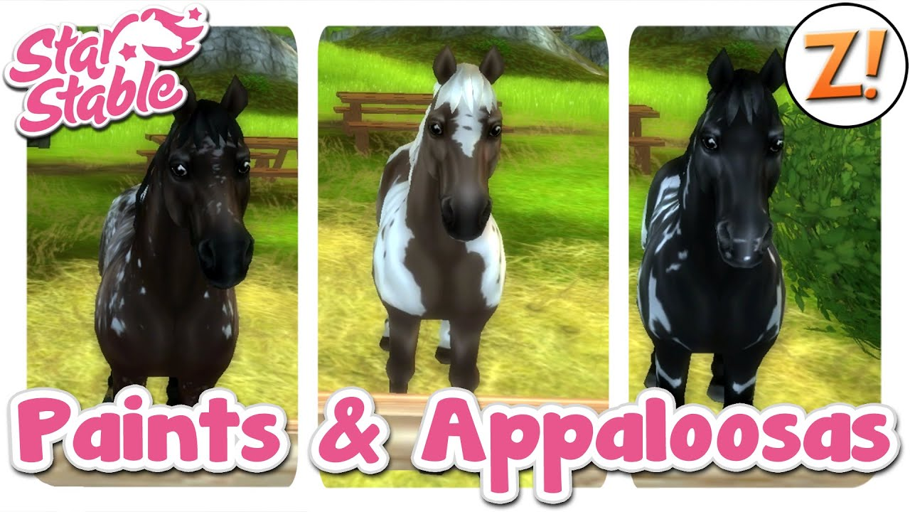 Star Stable Sso Neues Paint Horse Amp Appaloosas Update