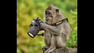 Funny animal compilation 2020 |DAILY Funny | must watch this 🤣