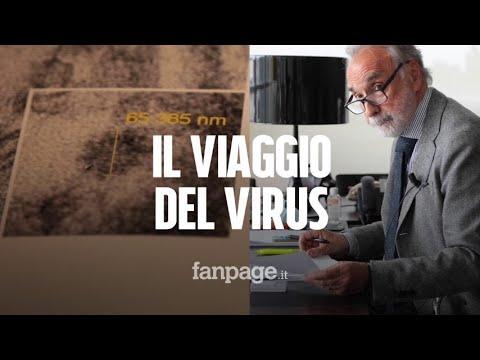 Il Coronavirus nel rene: la prima foto della scoperta esclusiva dell'Istituto Mario Negri